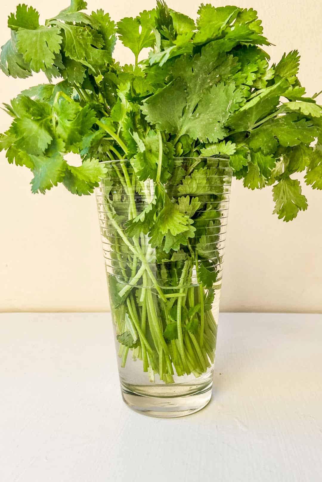 cilantro in a water glass